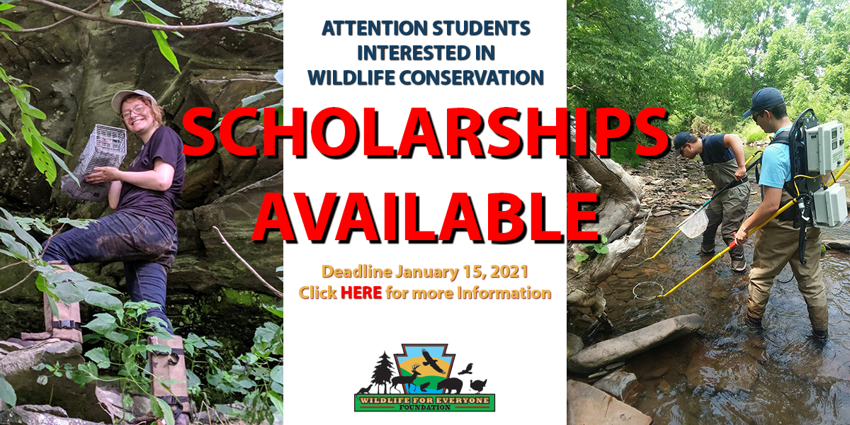 Apply for a 2021 Wildlife for Everyone Foundation Scholarship